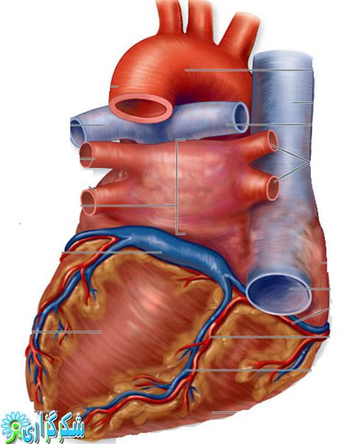 جراحی قلب رضایتنامه بیمار