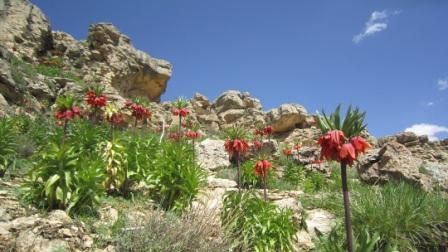 طبیعت زیبای « داش قزقپان»