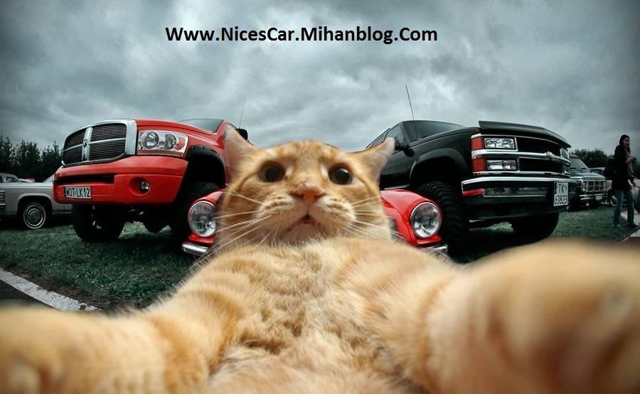 گربه و ماشین آمریکایی