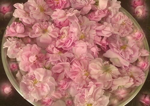 زیباترین گل دنیا تقدیم به قلب همه ی شما ها