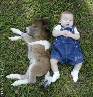 بچه و کره خر
