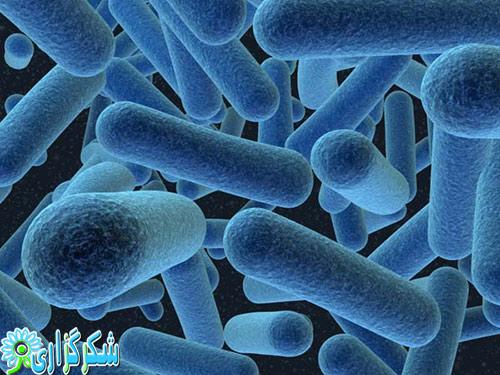 باکتری-روده-عکس-چاقی-لاغری-رژیم-قرص