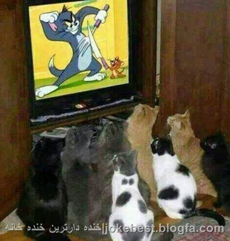 عکس های طنز خنده دار
