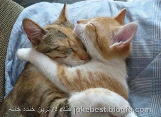 http://s5.picofile.com/file/8126267076/عکس_جالب_گربه_ها.jpg
