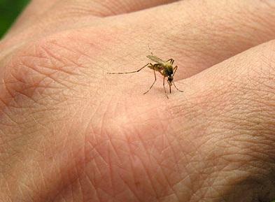 پزشکی: پشهگزیدگی از حساسیت عادی تا خطر مرگ