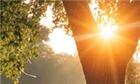 علمی: اثرات نور صبحگاهی بر بدن انسان