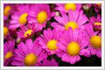 والپیپرهایی پر از گل