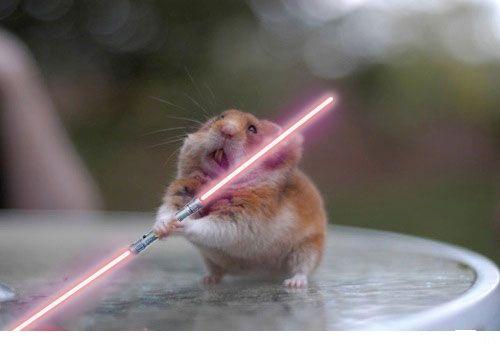 http://s5.picofile.com/file/8129540526/sweeping_hamster_lightsaber.jpg