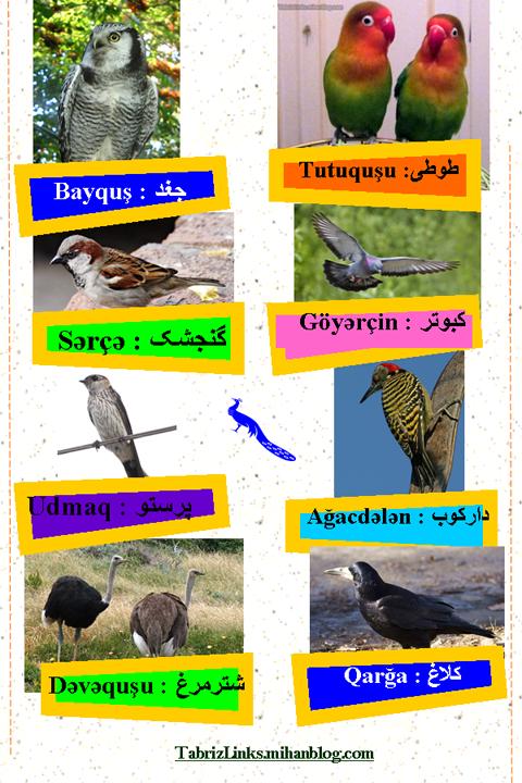 پرندگان 1