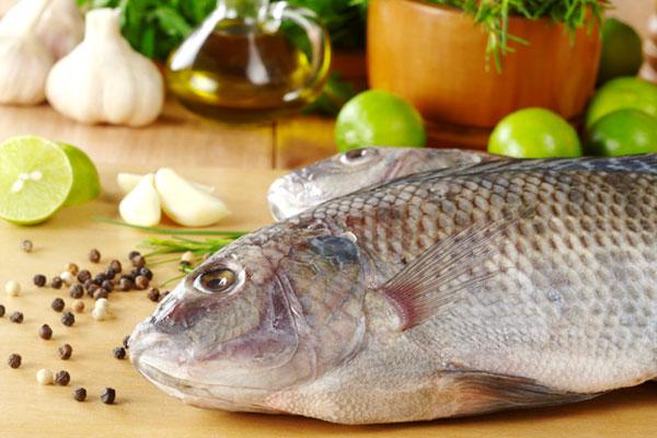 انتخاب ماهی مناسب