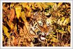 تصاویری زیبایی از حیوانات برگزیده جئوگرافیک