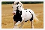 زيباترين اسب هاي جهان