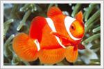 تصاویر زیبایی از ماهی های رنگارنگ