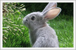 خرگوش های بامزه