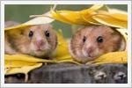 تصاویر با مزه از حیوانات
