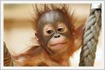 تصاویر دیدنی و بامزه از بچه حیوانات