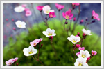 تصاویر بسیار زیبا از گل ها