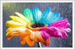 گل های هفت رنگ