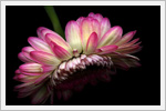 تصاویری برای بک گراند شما با طرح گل