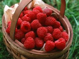 تغذیه: تاثیر انگور در پرتو درمانی تومورهای سرطانی