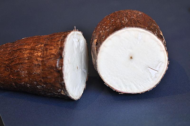 ریشه کاساوا