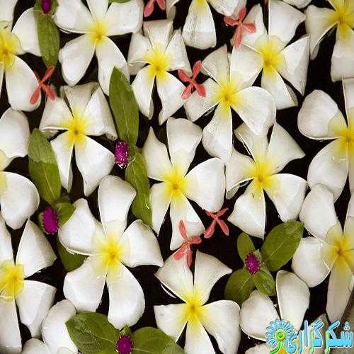 عید-فطر-مناجات-صحیفه-سجادیه-عکس-تصویر-مبارک-تبریک-شادباش