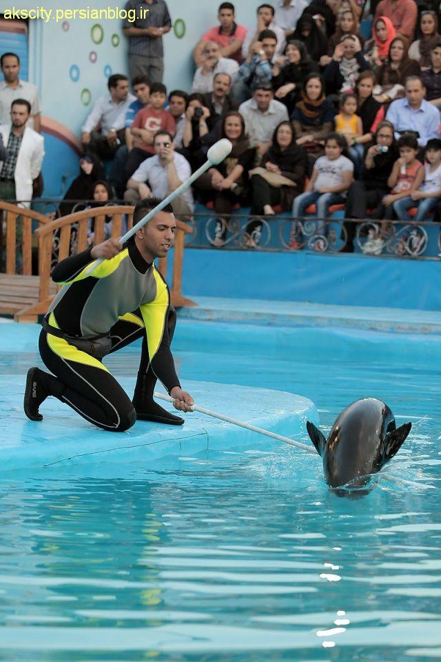 عکسهای دیدنی پارک دلفین های برج میلاد