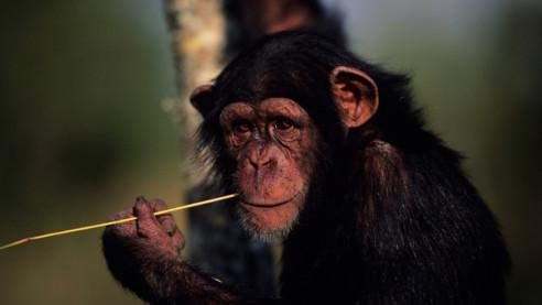 رازهایی در مورد حیوانات