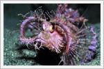 عجیب ترین ماهی های اقیانوس