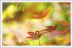 تصاویر زیبا و دیدنی از طبیعت