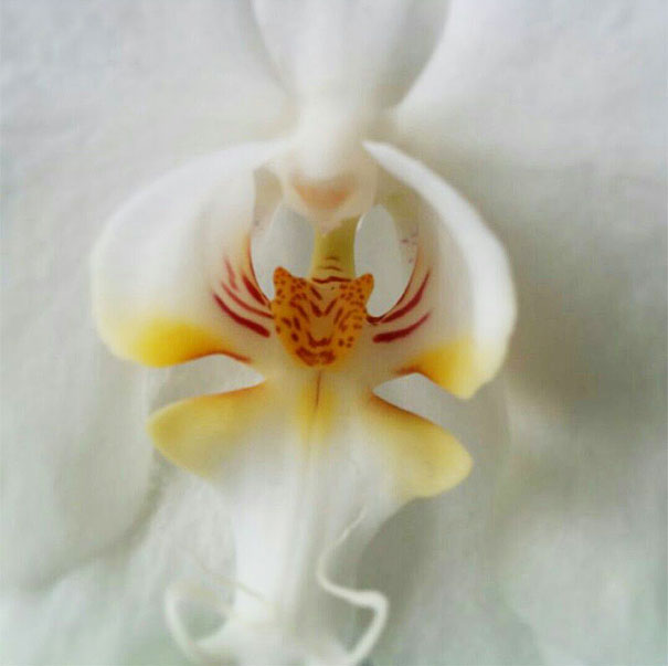 فتوگالری: عجیب ترین گل های دنیا