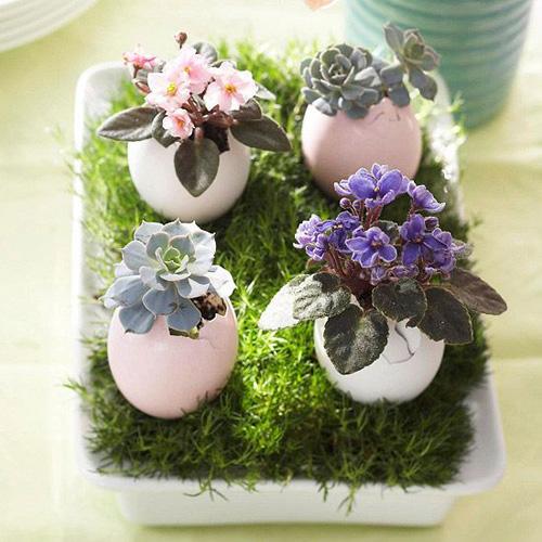 کاربرد تخم مرغ ها/محرمانه18-