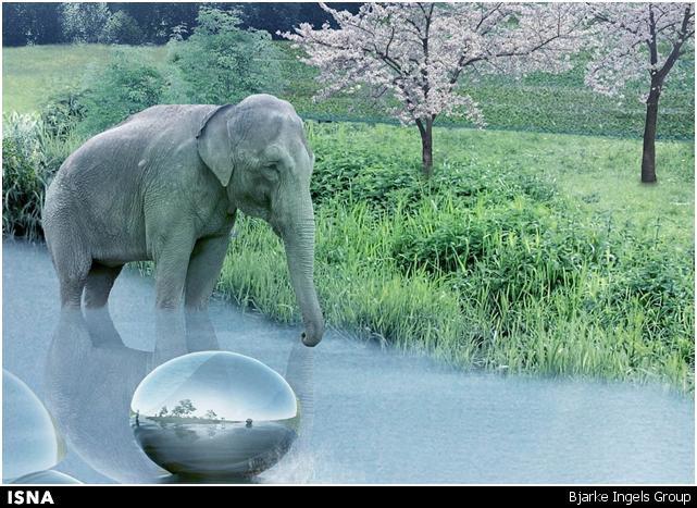 مطالب داغ: باغ وحشی که بازدیدکنندگان را از دید حیوانات نامرئی میکند