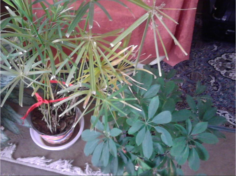 تصویر گیاهانمان