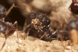 مطالب داغ: آیا مورچهها زمین را نجات میدهند؟