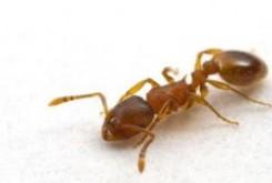 علمی و فناوری: مورچهها هم شخصیت دارند!