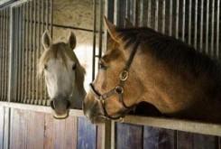 علمی و فناوری: آیا میدانید اسبها چگونه صحبت می کنند؟