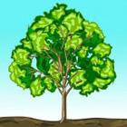 درخت ، دلتنگِ تبر شد ...