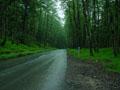 جنگل کاسف - شهرستان بردسکن