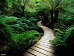 طبیعتِ زیبای بردسکن