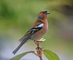 تصاویر متحرک از پرندگان