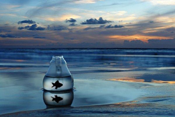 تنگ ماهی روبه روی دریا