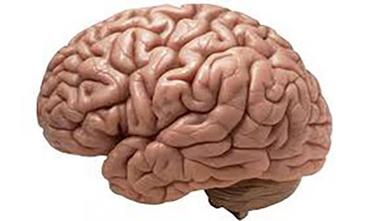 علمی و فناوری: سنجش نبض پیری مغز با روش جدید