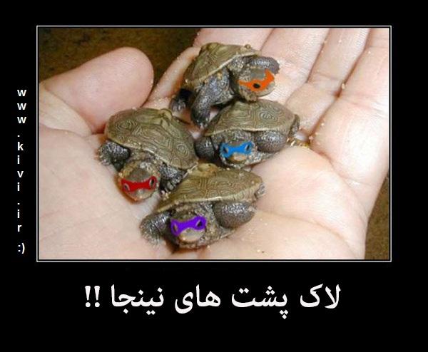 لاکپشت های نینجا !!!