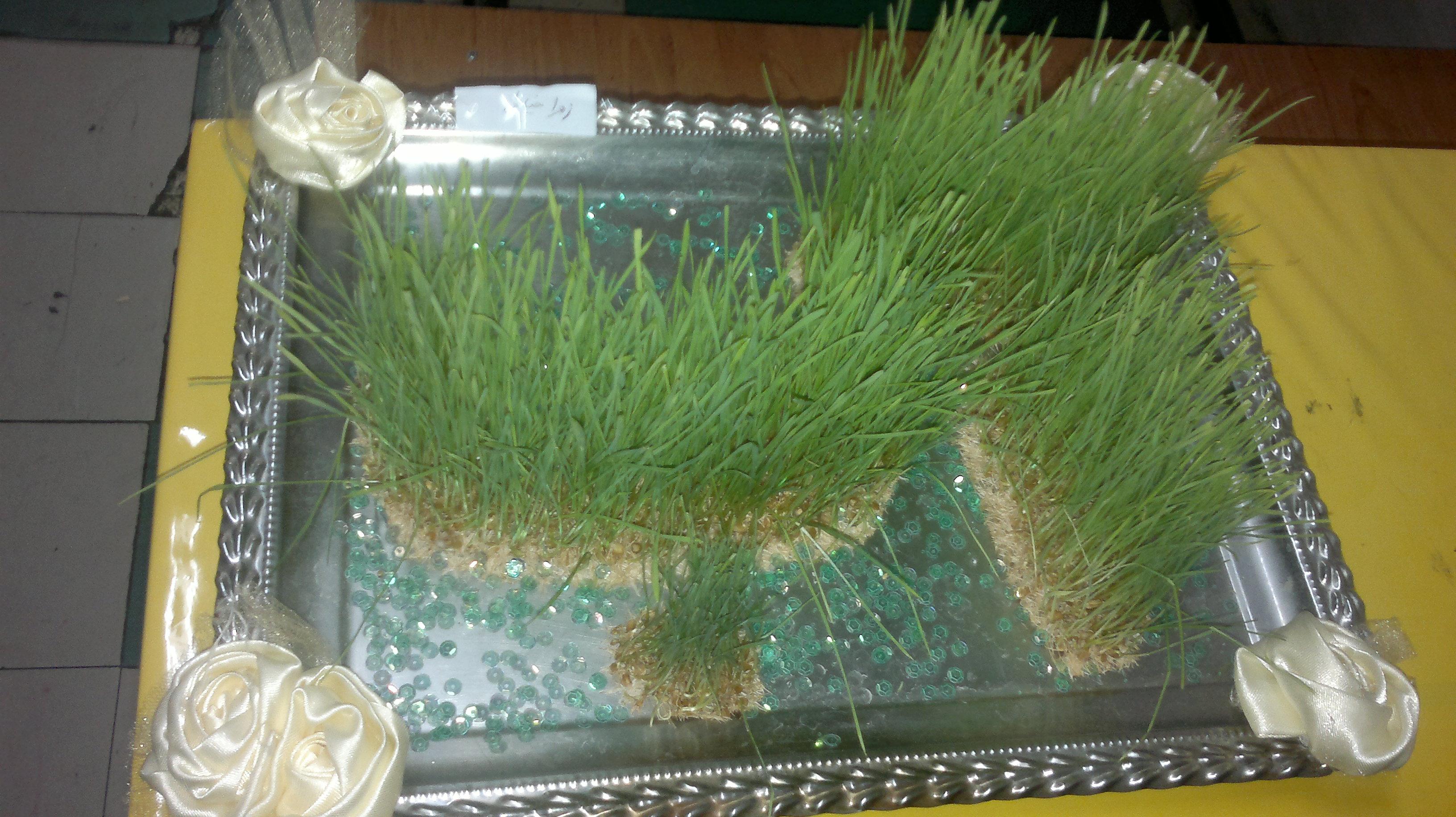 سبزه درس آب که توسط اولیا ی سال گذشته قبل از تدریس درس آب سبز شده بود