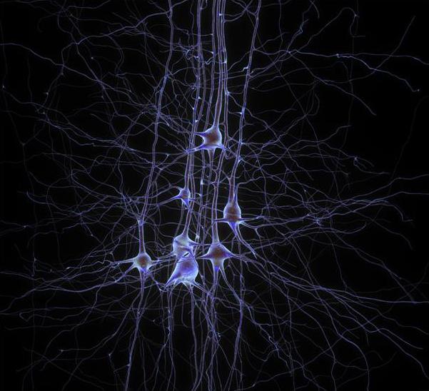 علمی و فناوری: حل معمای تقدم مرغ یا تخممرغ در وادی مغز!