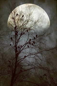 http://s5.picofile.com/file/8138730618/moon_and_tree.jpg