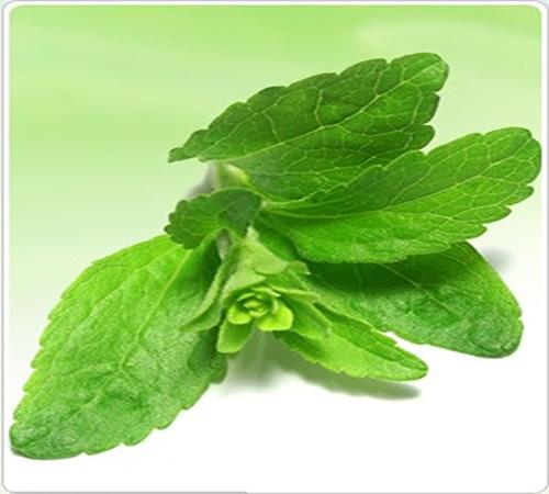 طب سنتی و داروهای گیاهی: این گیاه دوست دیابتی ها و دشمن چاقی ست