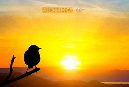 گنجشک و خدا - عطرخدا www.atrekhoda.com