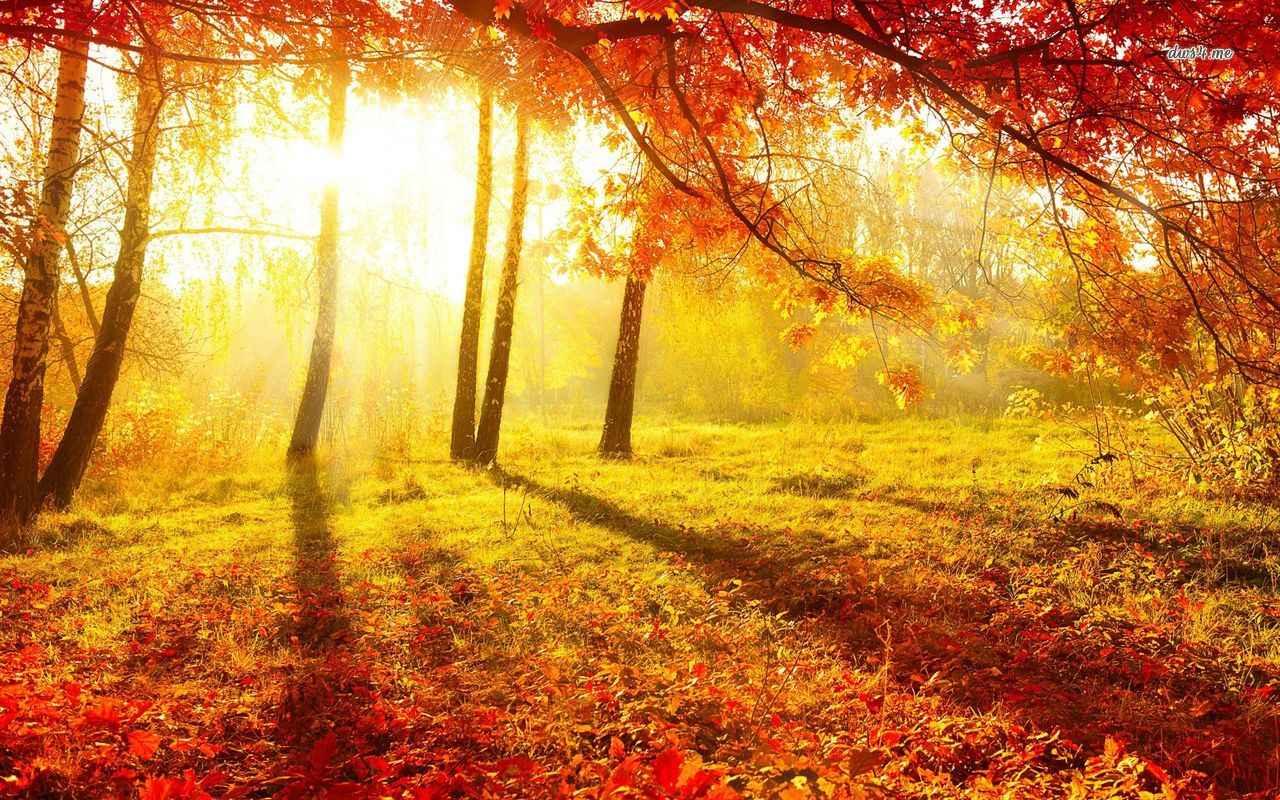 عکس های رویایی و رمانتیک از فصل پاییز